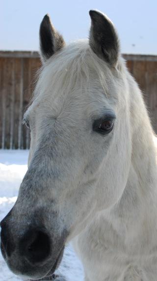 Beautiful-Lunar-the-horse