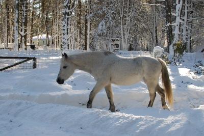 Lunar-the-horse-in-a-snowy-field