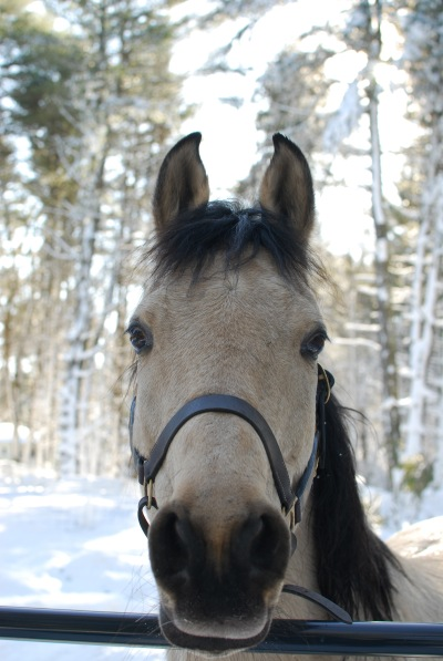 Spirit-the-horse-is-handsome