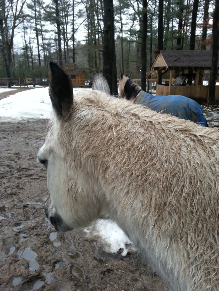 wet-pony