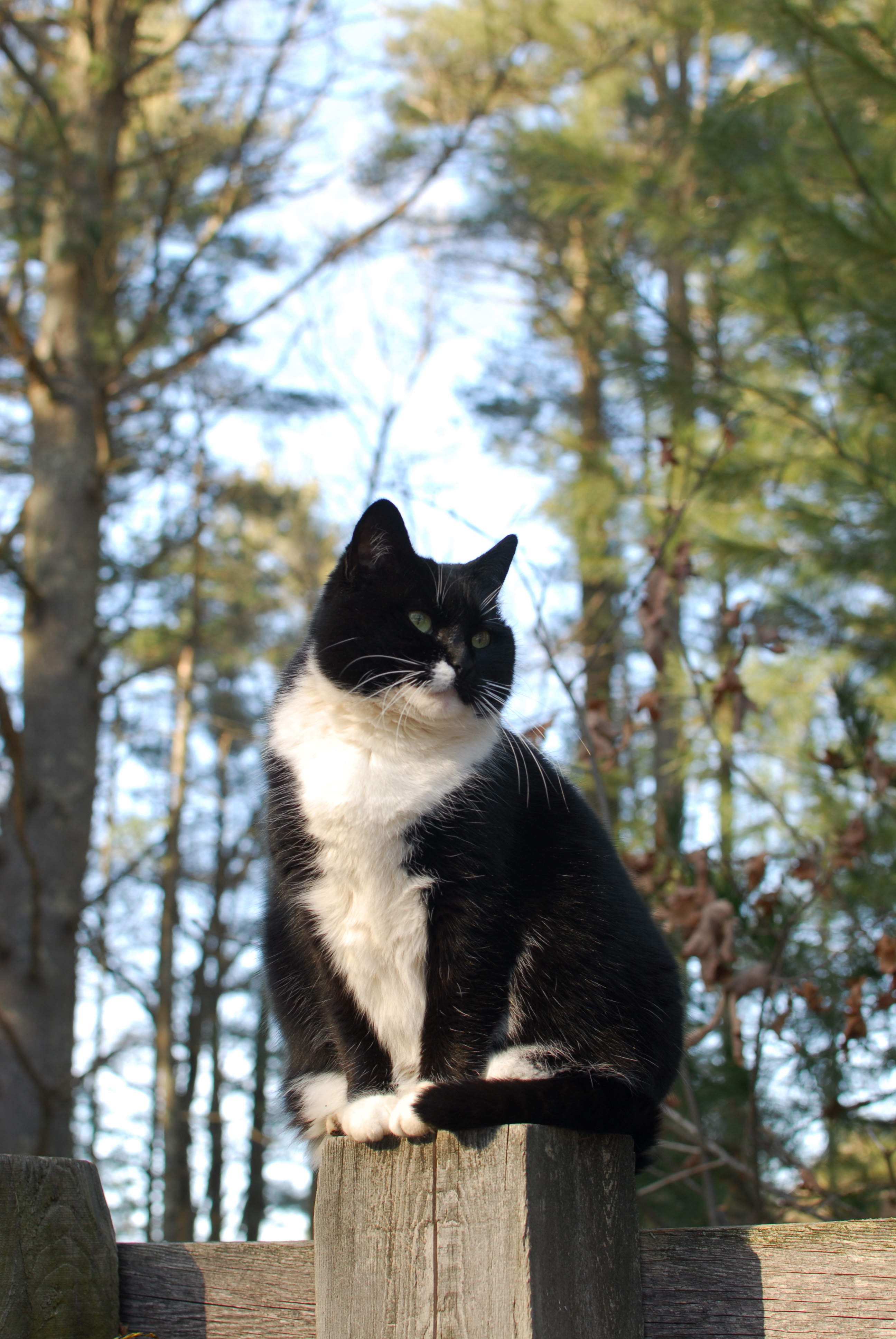 Delilah-the-winslow-cat-perched-on-a-post