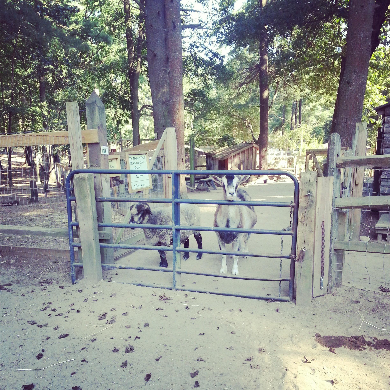 Gully_Athena_Winslow_Farm_Mindingtheminis