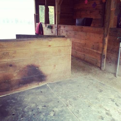 Lunar_Athena_Empty_Stall_Winslow_Farm_Minding_the_Minis
