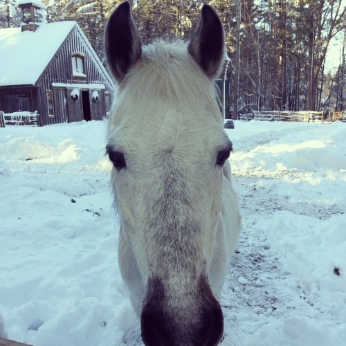 Lunar_Horse_Winslow_Farm_MindingtheMinis