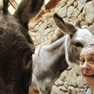 Person with two donkeys