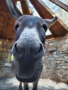 Close up of donkey
